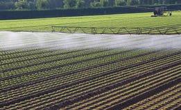 Impianto di irrigazione automatico per un campo di insalata fresca fotografia stock