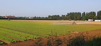 Impianto di irrigazione automatico per un campo di insalata verde e fresca Fotografia Stock Libera da Diritti