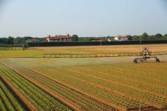 Impianto di irrigazione automatico per un campo di insalata verde pronto Fotografia Stock Libera da Diritti