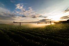 Impianto di irrigazione che innaffia il raccolto dei fagioli della soia Immagine Stock Libera da Diritti