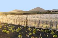 Impianto di irrigazione dell'acqua su un campo Immagini Stock Libere da Diritti