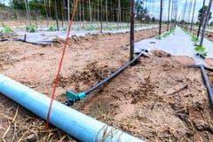 Impianto di irrigazione dell'acqua sul giacimento del melone Fotografia Stock Libera da Diritti