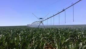 Impianto di irrigazione dell'acqua sull'azienda agricola Immagini Stock