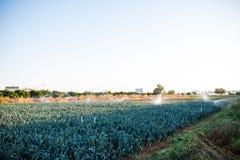 Impianto di irrigazione nella funzione che innaffia le piante agricole Fotografia Stock Libera da Diritti