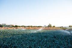 Impianto di irrigazione nella funzione che innaffia le piante agricole Immagine Stock Libera da Diritti