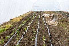 Impianto di irrigazione in serra fotografia stock for Irrigazione serra