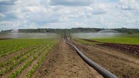 Impianto di irrigazione su terreno agricolo Fotografia Stock Libera da Diritti