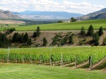 Impianto di irrigazione su un giacimento del vino Immagine Stock Libera da Diritti