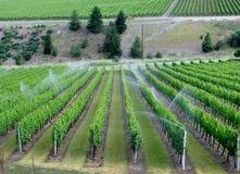 Impianto di irrigazione su un giacimento del vino Fotografia Stock Libera da Diritti