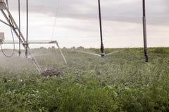 Impianto di irrigazione sul campo verde Fotografia Stock Libera da Diritti