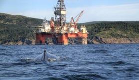 Impianto offshore e megattera Fotografie Stock