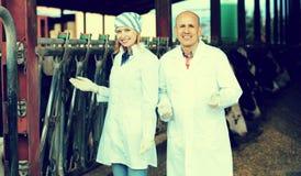 Impiegati dell'azienda agricola che stanno vicino a mungere gregge Fotografia Stock