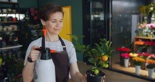 Impiegato allegro della pianta d'innaffiatura di cirtus del deposito di fiore in vaso in posto di lavoro video d archivio