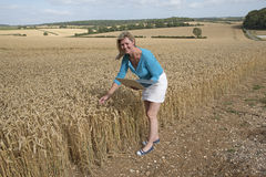 Impiegato dell'azienda agricola nel campo del controllo di qualità del grano Fotografie Stock Libere da Diritti