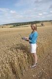 Impiegato dell'azienda agricola nel campo del controllo di qualità del grano Immagine Stock Libera da Diritti