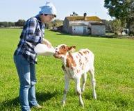 Impiegato femminile che alimenta vitello neonato sul pascolo dell'erba fotografia stock libera da diritti
