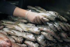 Impilamento dei pesci Fotografia Stock