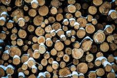 Impilato esattamente collega la foresta dell'inverno Fotografia Stock Libera da Diritti