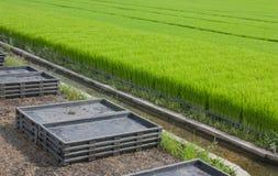 Impili i vassoi di piantine e la piantagione dei raccolti Immagini Stock