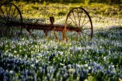 Implementar antigo da exploração agrícola em um campo dos Bluebonnets Foto de Stock Royalty Free