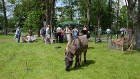 Implicado la gente animal y turística del burro lindo goza de animales del campo metrajes