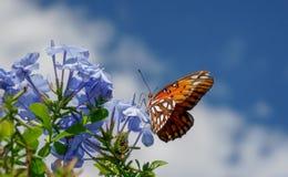 Impollinazione della farfalla di monarca Immagine Stock Libera da Diritti