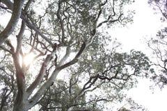 Imponerande gamla träd i templet Royaltyfria Bilder