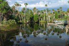 Imponerande palmträd Royaltyfri Bild