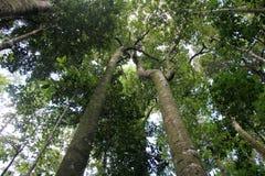 Imponerande träd Royaltyfri Fotografi