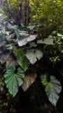 Imponująco Amazonian egzotów liście po środku dżungli obraz royalty free