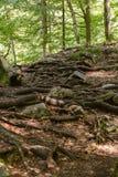 Imponująco drzewo korzenia system obraz stock