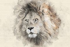 Imponująco lwa portreta nakreślenia styl ilustracja wektor