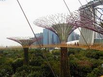 Imponująco, zawieszony w lotniczych ogródach zatoką, Singapur fotografia stock