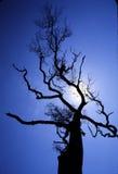 imponujący drzewo zdjęcie royalty free