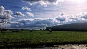 Imponująco chmury w holendera krajobrazie obraz stock