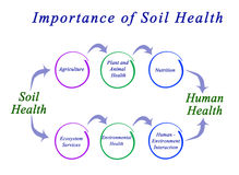 Importance of Soil Health Royalty Free Stock Image