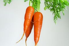 Important human food, carrot root vegetables, rich in carotene, vegetarian nutrition and health ingredients, stock images