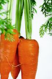 Important human food, carrot root vegetables, rich in carotene, vegetarian nutrition and health ingredients, stock photos