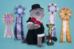 important Scottish cat with their awards at an isolated background royalty free stock photo