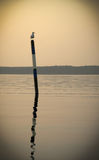 Important seagull sitting on the sea buoy in the sunset light of the sun Royalty Free Stock Photos