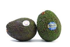 Importazione della Nuova Zelanda dell'avocado da vendere fotografia stock libera da diritti