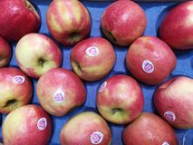 Imported apples fruits. Imported fruit apples collected royalty free stock images