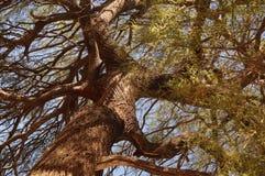 Imposant drzewo od above Zdjęcia Stock