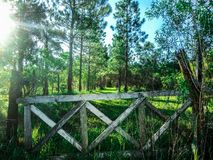 Old entrance to an abandoned field. It is impossible not to think that this place is haunted or something like that. You see a path that undoubtedly leads to a royalty free stock photo