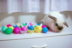 Imposter Rabbit Royalty Free Stock Image