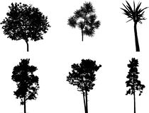 Imposti gli alberi isolati - 1 Fotografie Stock Libere da Diritti