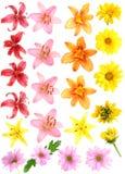 Imposti i fiori Immagine Stock Libera da Diritti