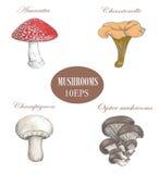 Imposti i funghi Illustrazione colorata Si espande rapidamente la raccolta Immagini Stock