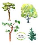 Imposti l'albero Fotografie Stock Libere da Diritti
