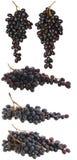 Imposti l'uva isolata. Immagine Stock